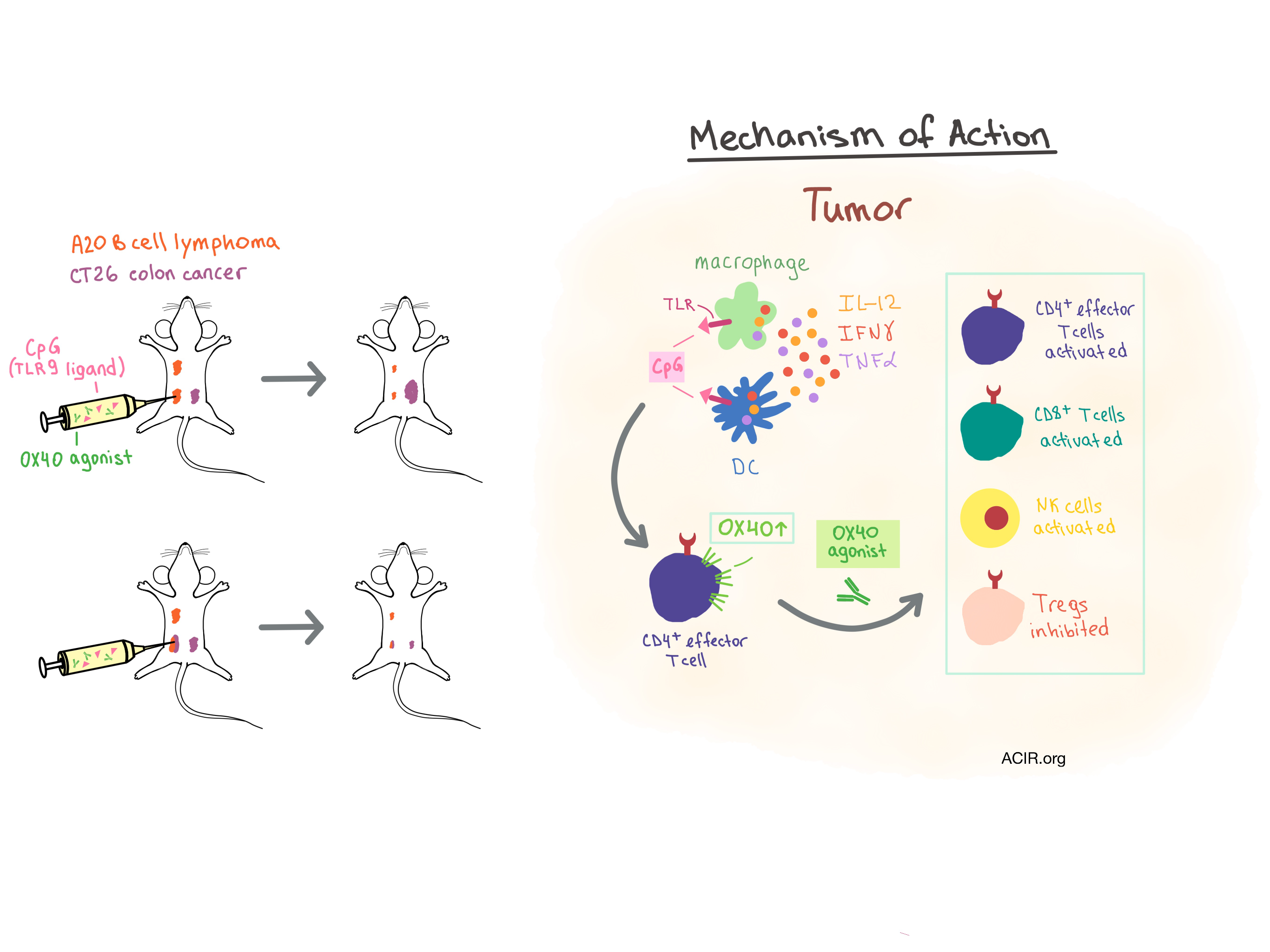 Unleashing innate and adaptive immunity with in situ vaccination
